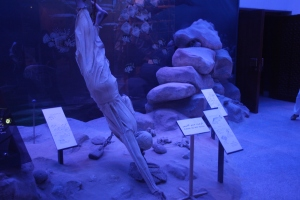 Pearl Diving, Dubai Museum, Dubai, UAE
