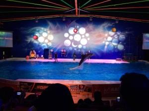 Dubai Dolphinarium, Dubai, UAE