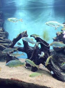 Aquarium, Musee Chateau, Annecy, France