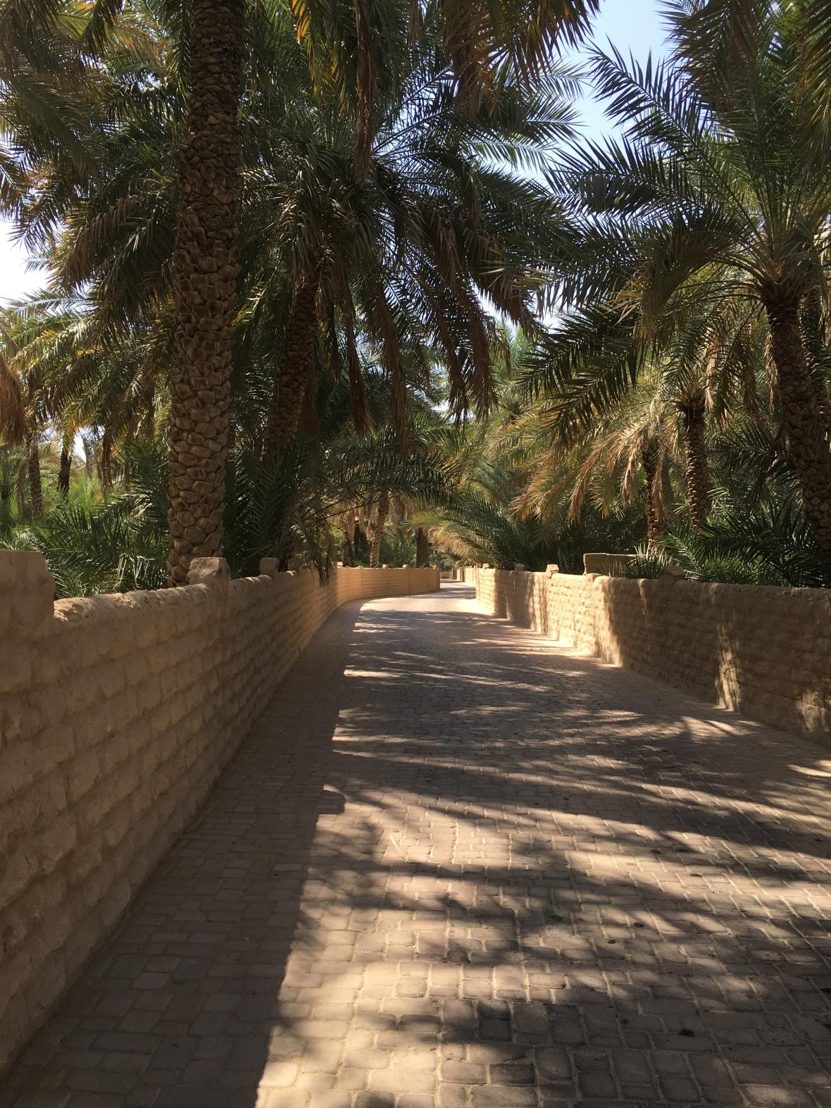 Al Ain Oasis, Al Ain, UAE (2)