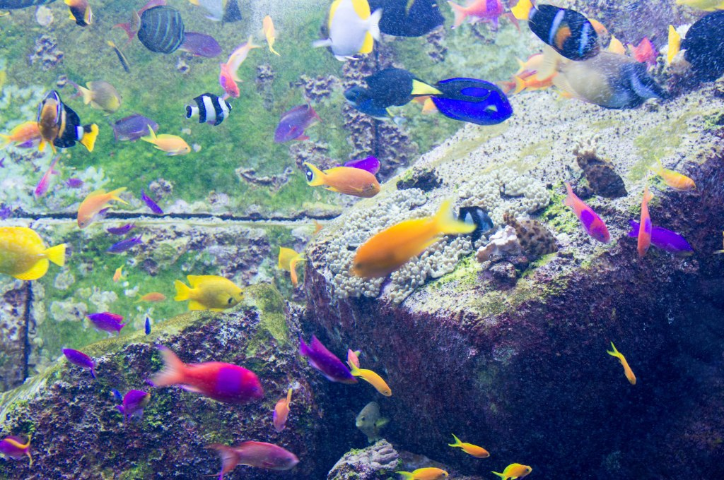 Colourful Fish, Atlantis Aquarium, Palm Jumeirah, Dubai, UAE
