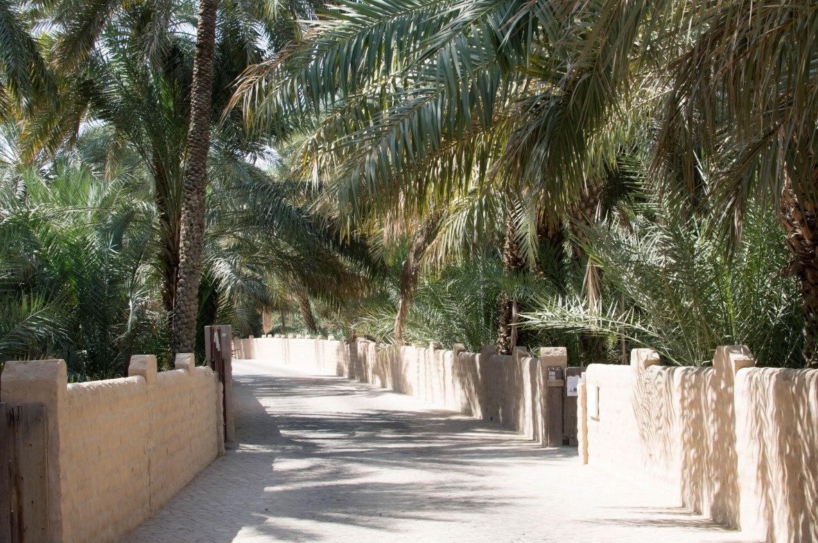Date Trees, Al Ain Oasis, Al Ain, UAE (9)