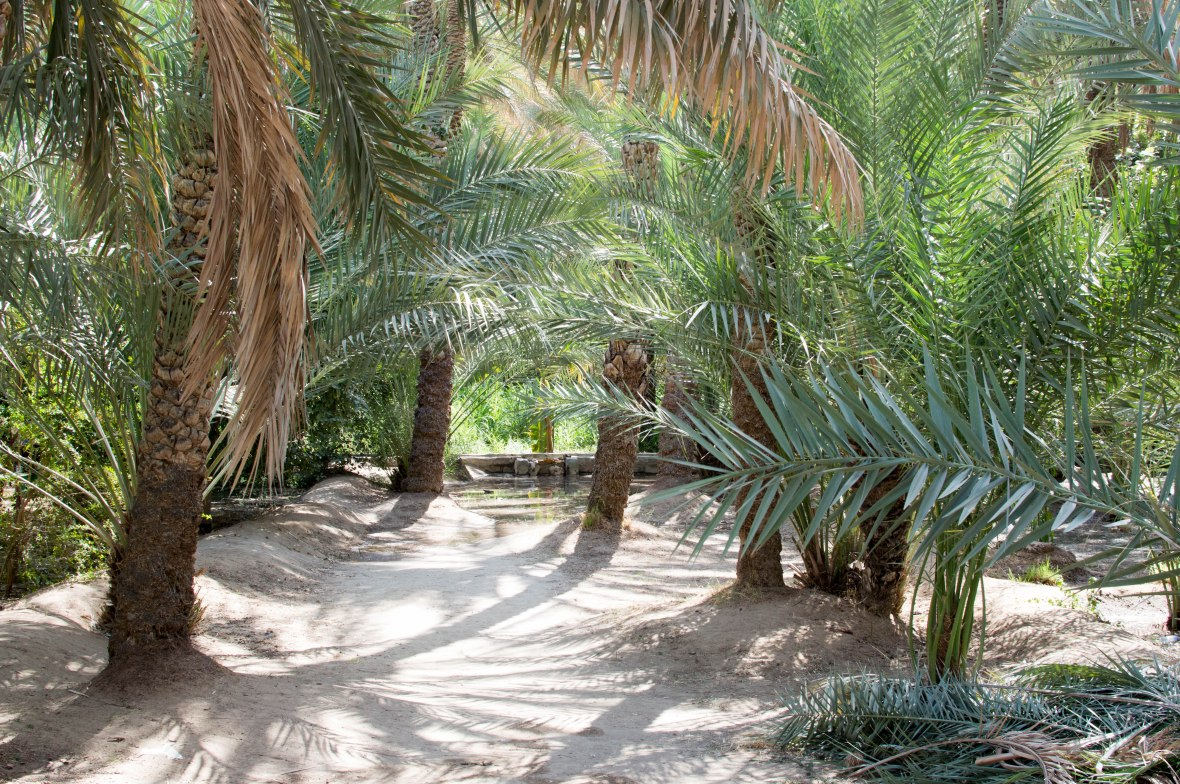 Date Trees, Al Ain Oasis, Al Ain, UAE
