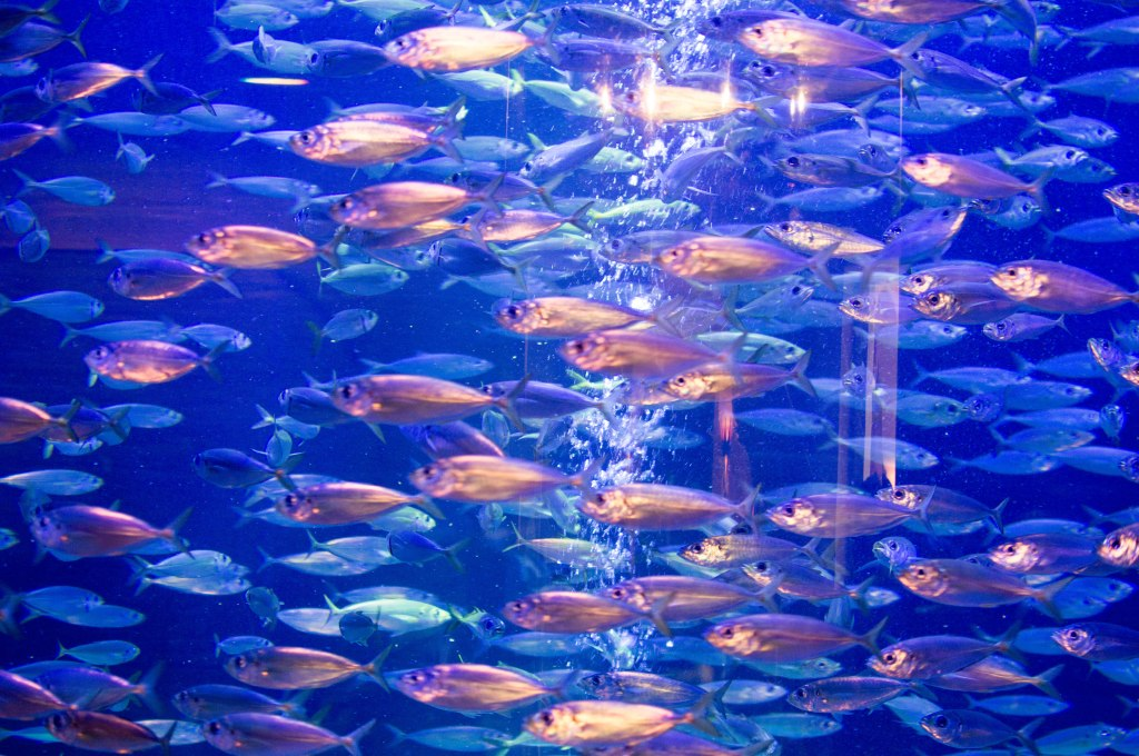 Fish, Atlantis Aquarium, Palm Jumeirah, Dubai, UAE