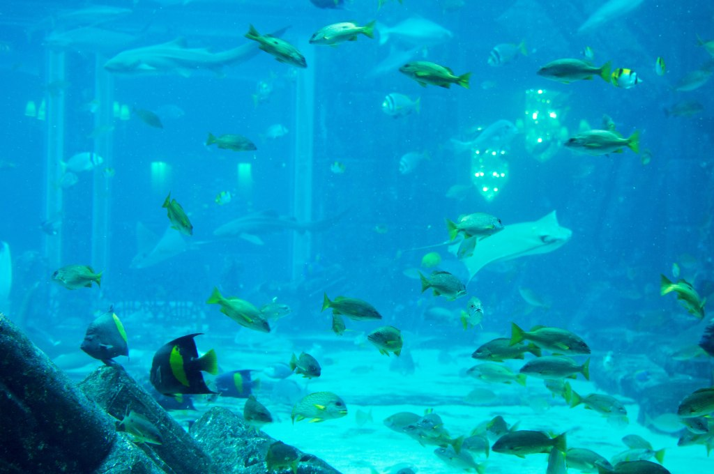 Fish Tank, Atlantis Aquarium, Palm Jumeirah, Dubai, UAE