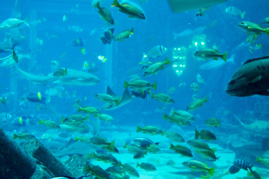 Large Fish Tank, Atlantis Aquarium, Palm Jumeirah, Dubai, UAE