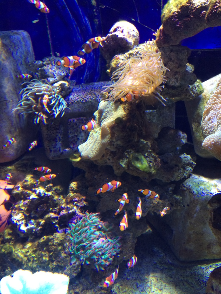 Nemo Tank, Lost Chambers Aquarium, Dubai, UAE
