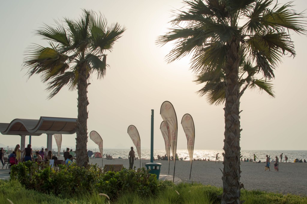 Palm Trees, Kite Beach, Dubai, UAE