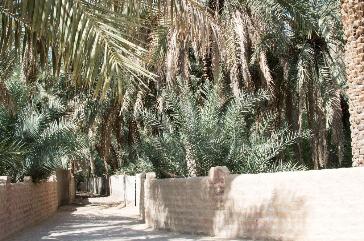 Pathway, Al Ain Oasis, Al Ain, UAE (4)