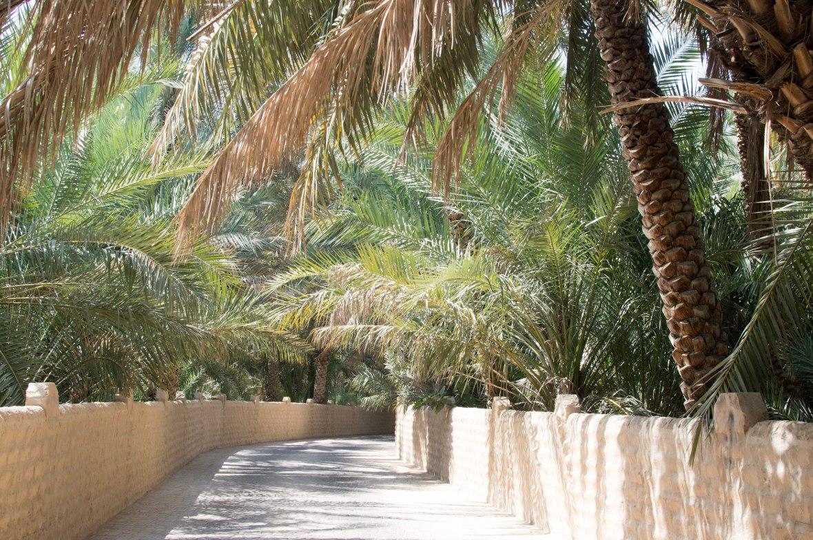 Pathway, Al Ain Oasis, Al Ain, UAE (5)