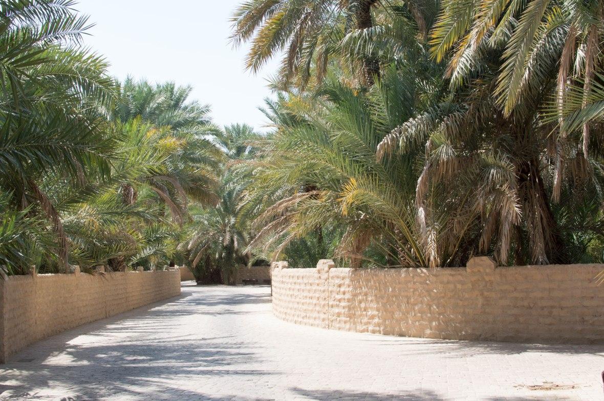 Pathway, Al Ain Oasis, Al Ain, UAE (6)