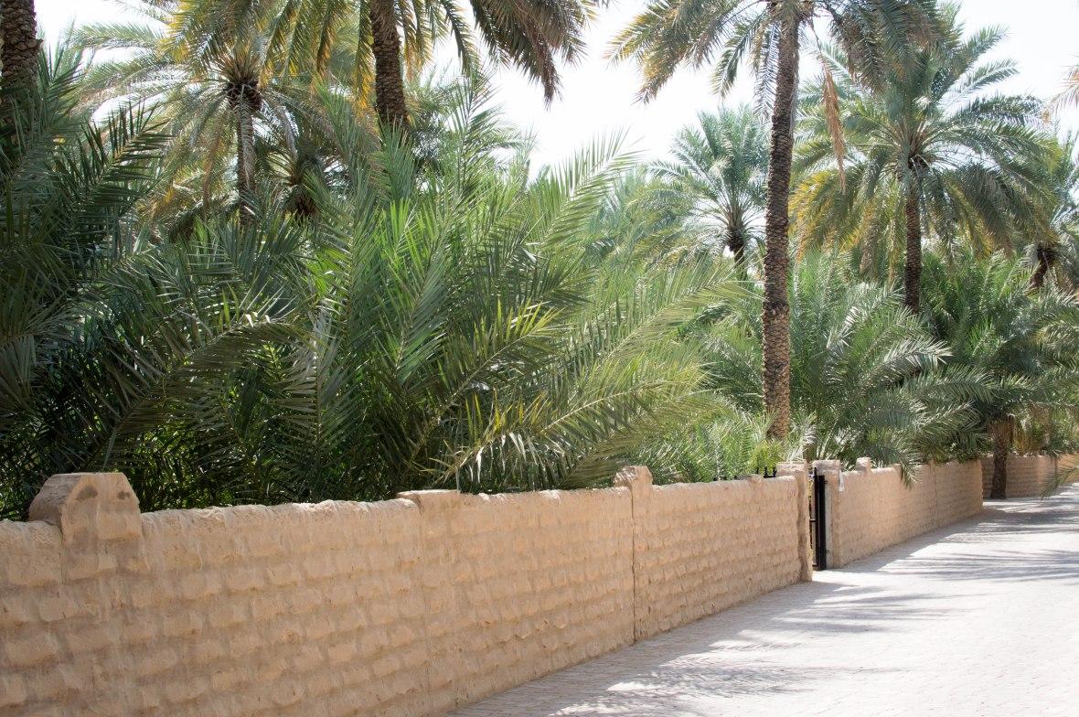 Pathway, Al Ain Oasis, Al Ain, UAE (7)