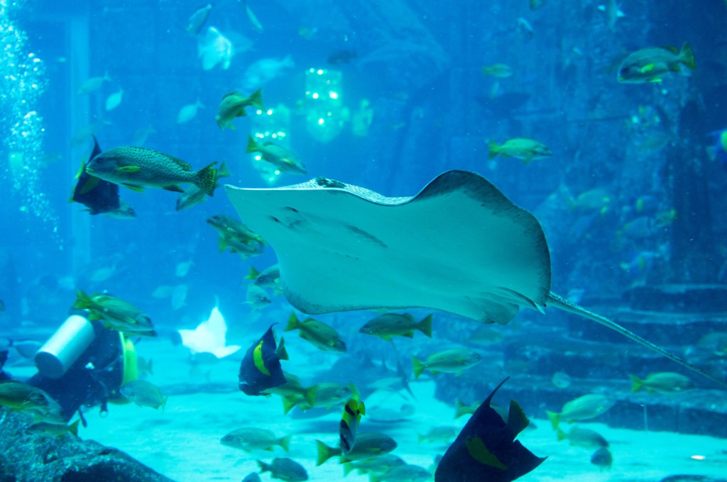 Stingray, Atlantis Lost Chambers Aquarium, Palm Jumeirah, Dubai, UAE