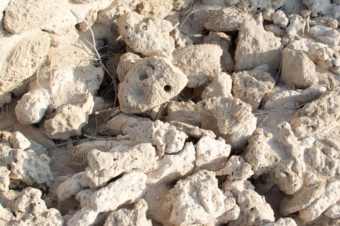 Dried Out Coral, Abandoned City, Al Jazirat Al Hamra, Ras Al Khaimah, UAE