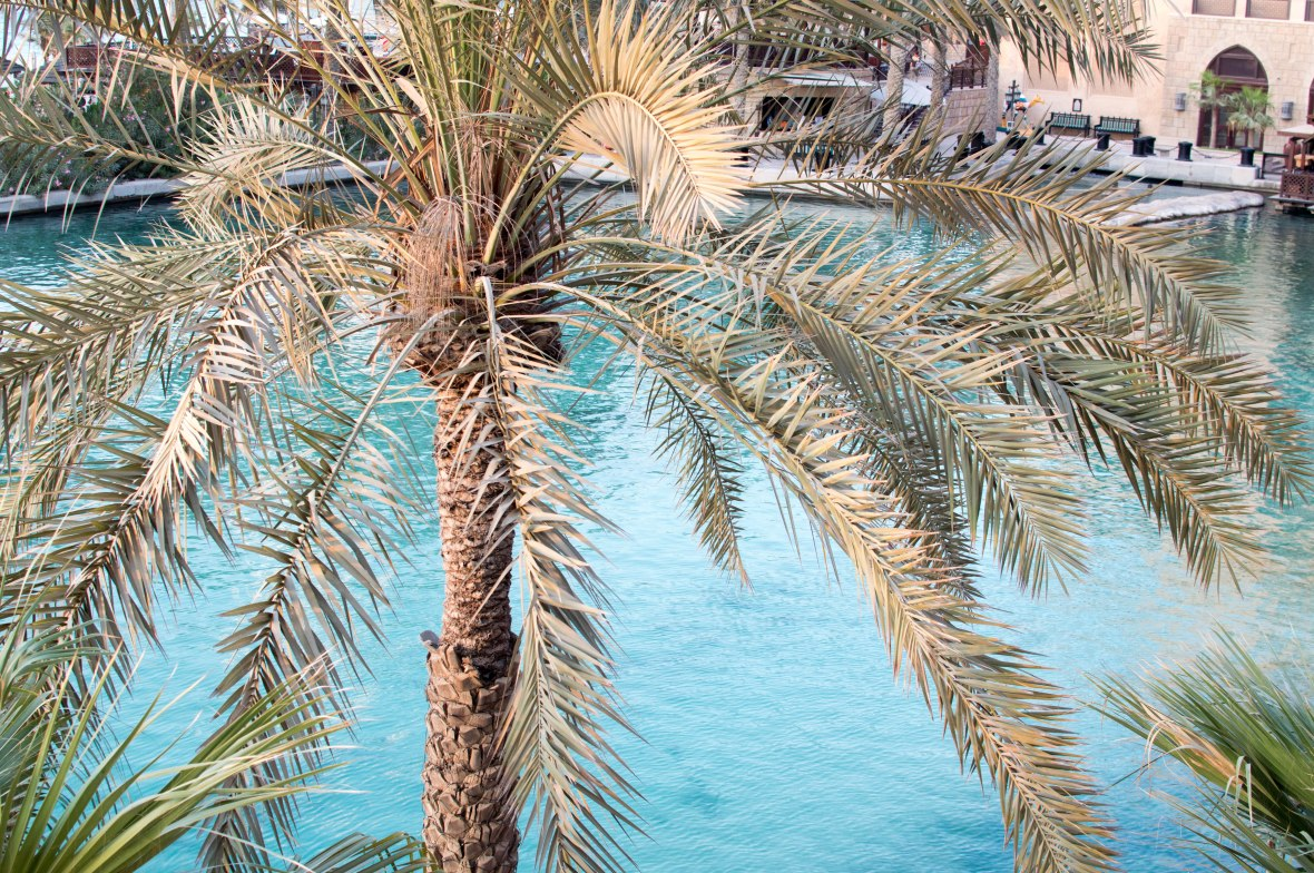 Palm Trees And Waterways From Bahri Bar, Madinat Jumeirah, Dubai, UAE
