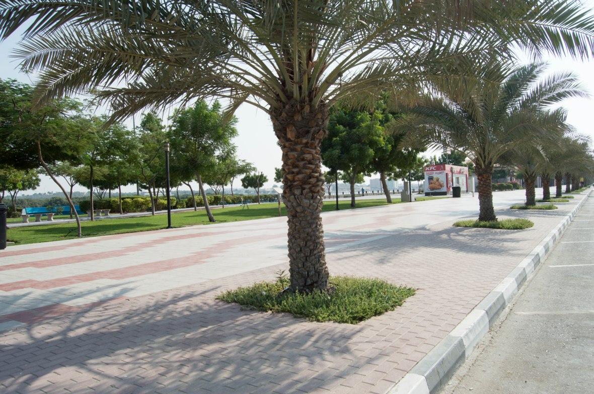 Palm Trees, Corniche, Ras Al Khaimah, UAE (2)