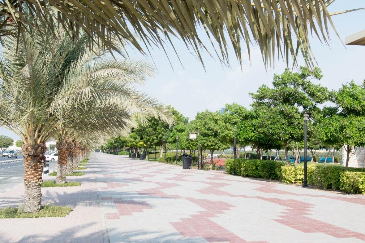 Palm Trees, Corniche, Ras Al Khaimah, UAE