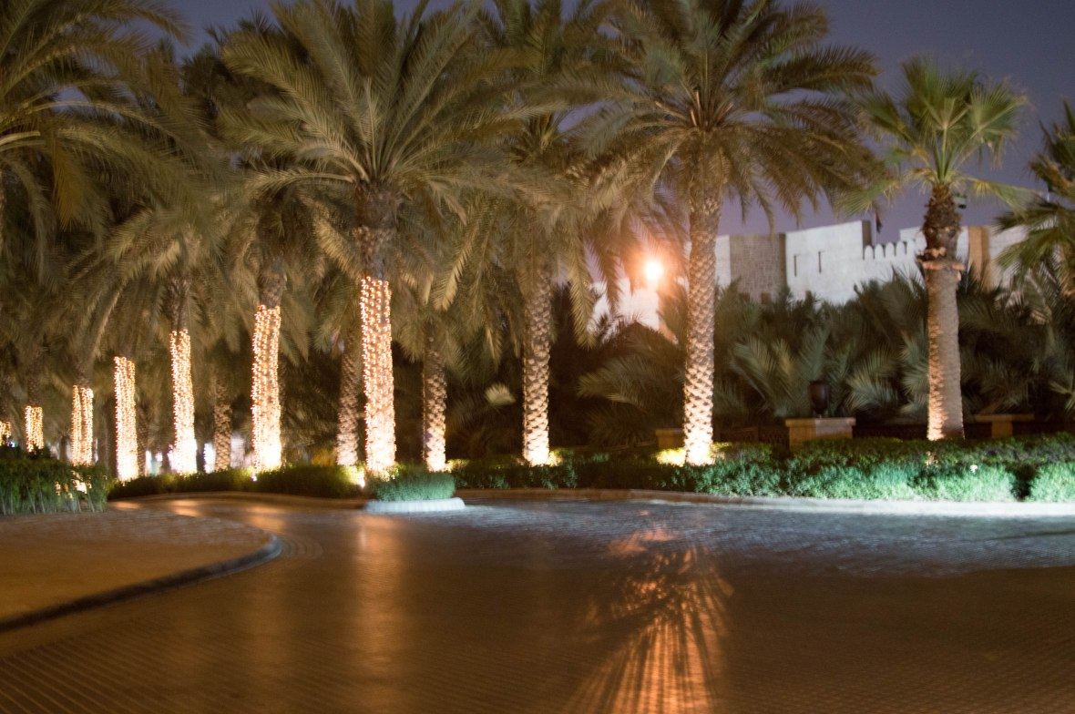Palm Trees, Madinat Jumeirah, Dubai, UAE (2)
