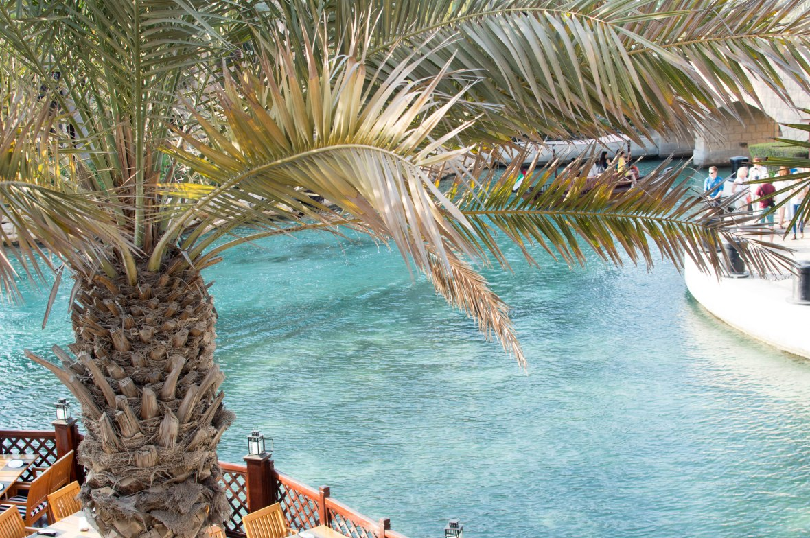 Palm Trees, Madinat Jumeirah, Dubai, UAE