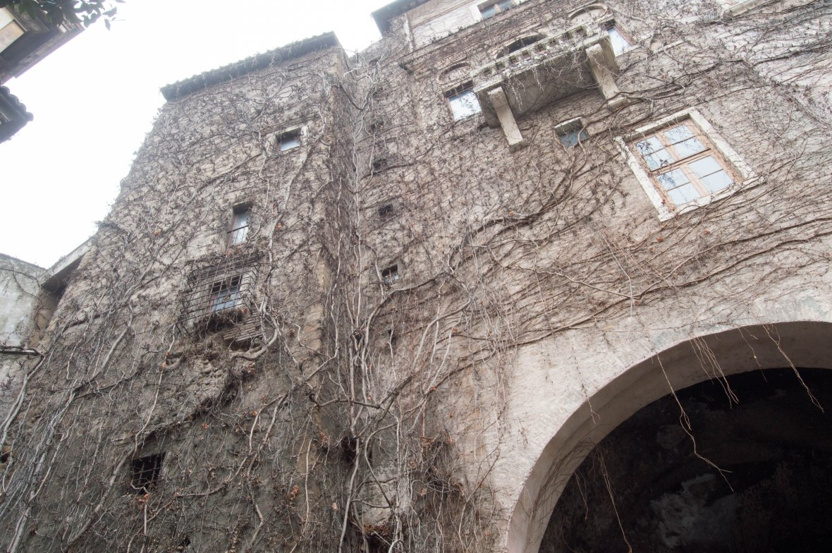 Ivy Branches, Rome, Italy