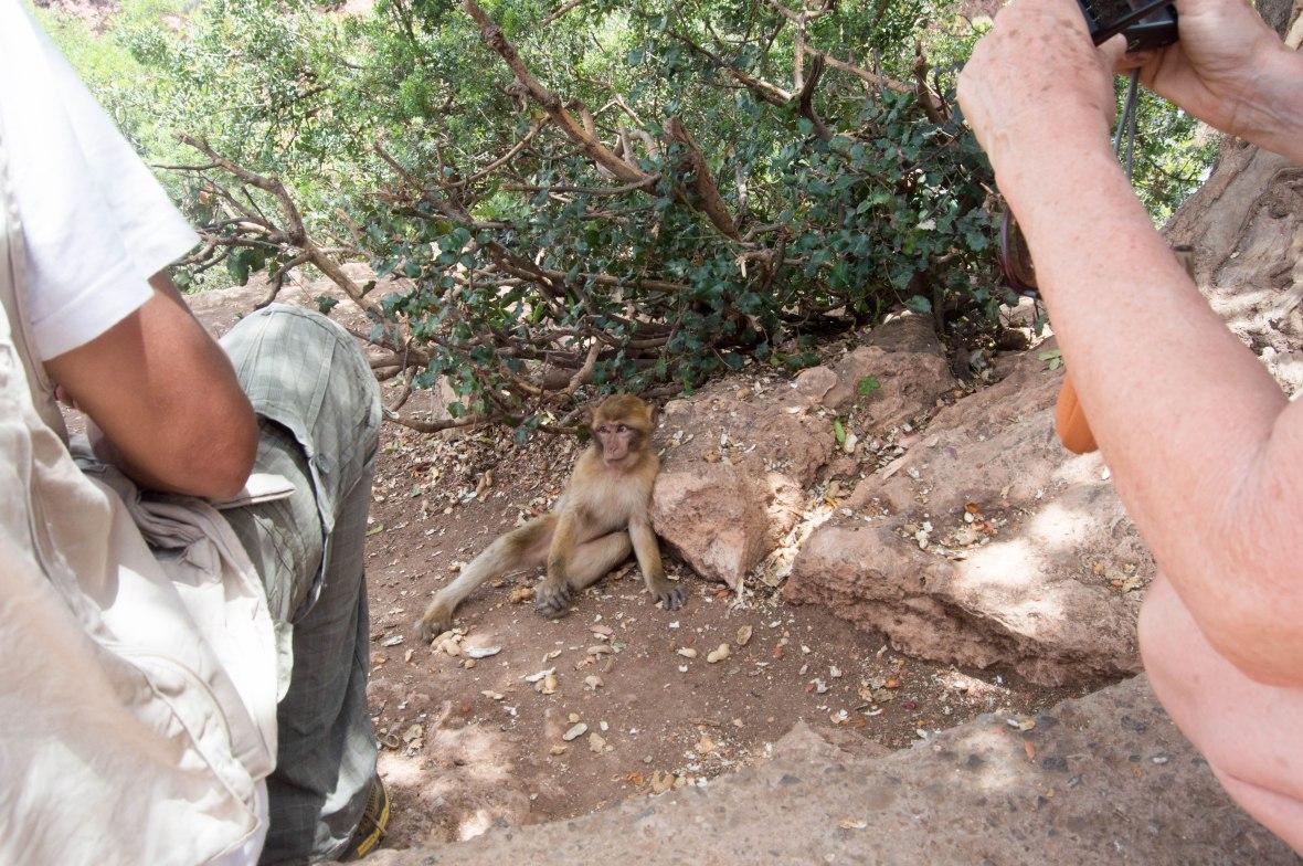 Baby Monkey, Ouzoud Falls, Morocco