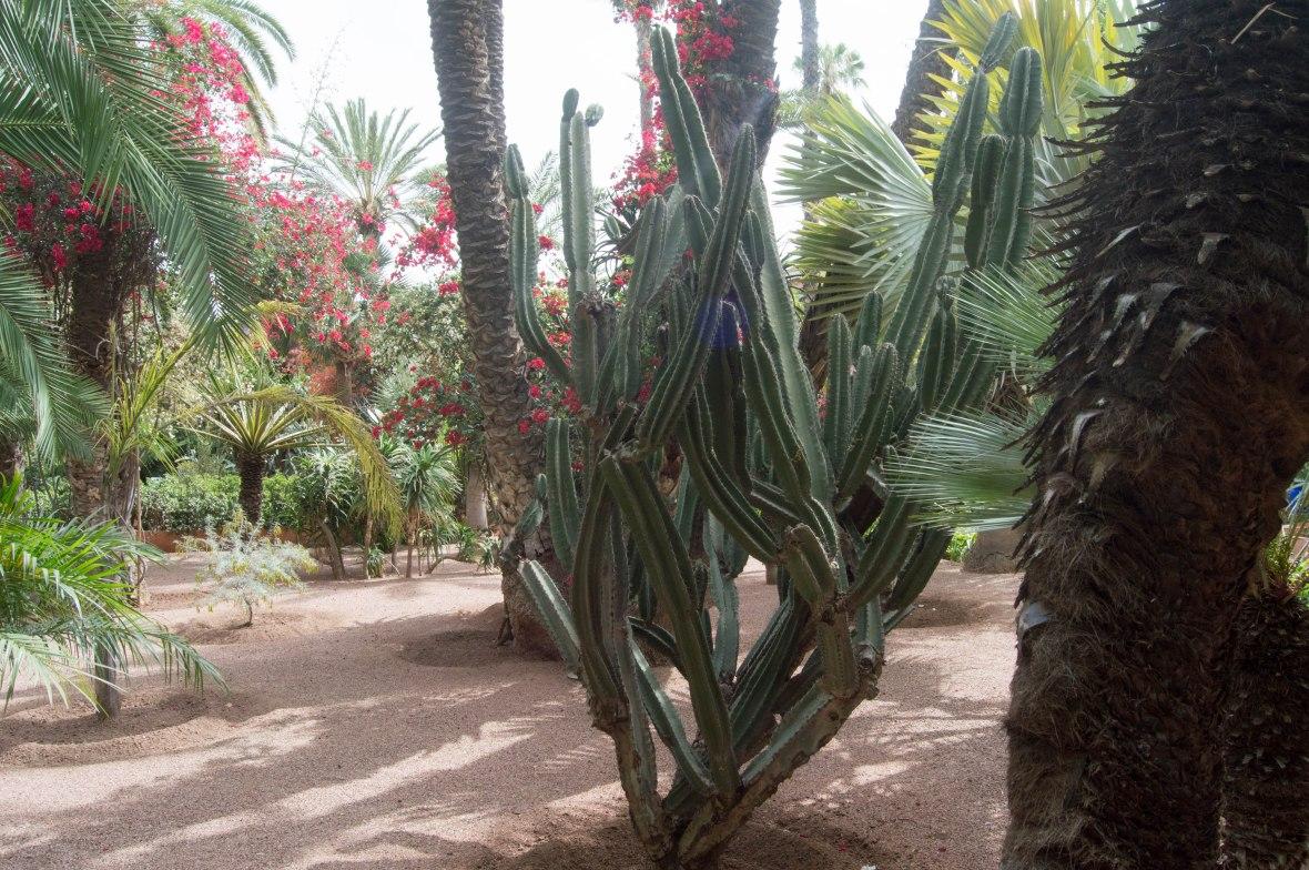 Cacti, Majorelle Garden, Marrakech, Morocco