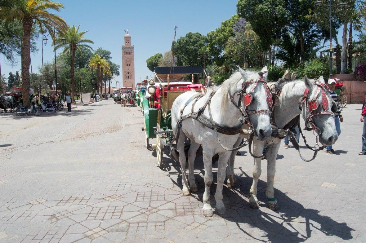 Calèches, Marrakech, Morocco