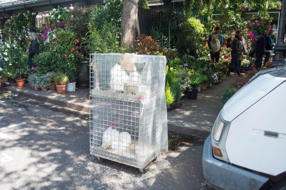 Chickens, Marché aux fleurs, Paris, France