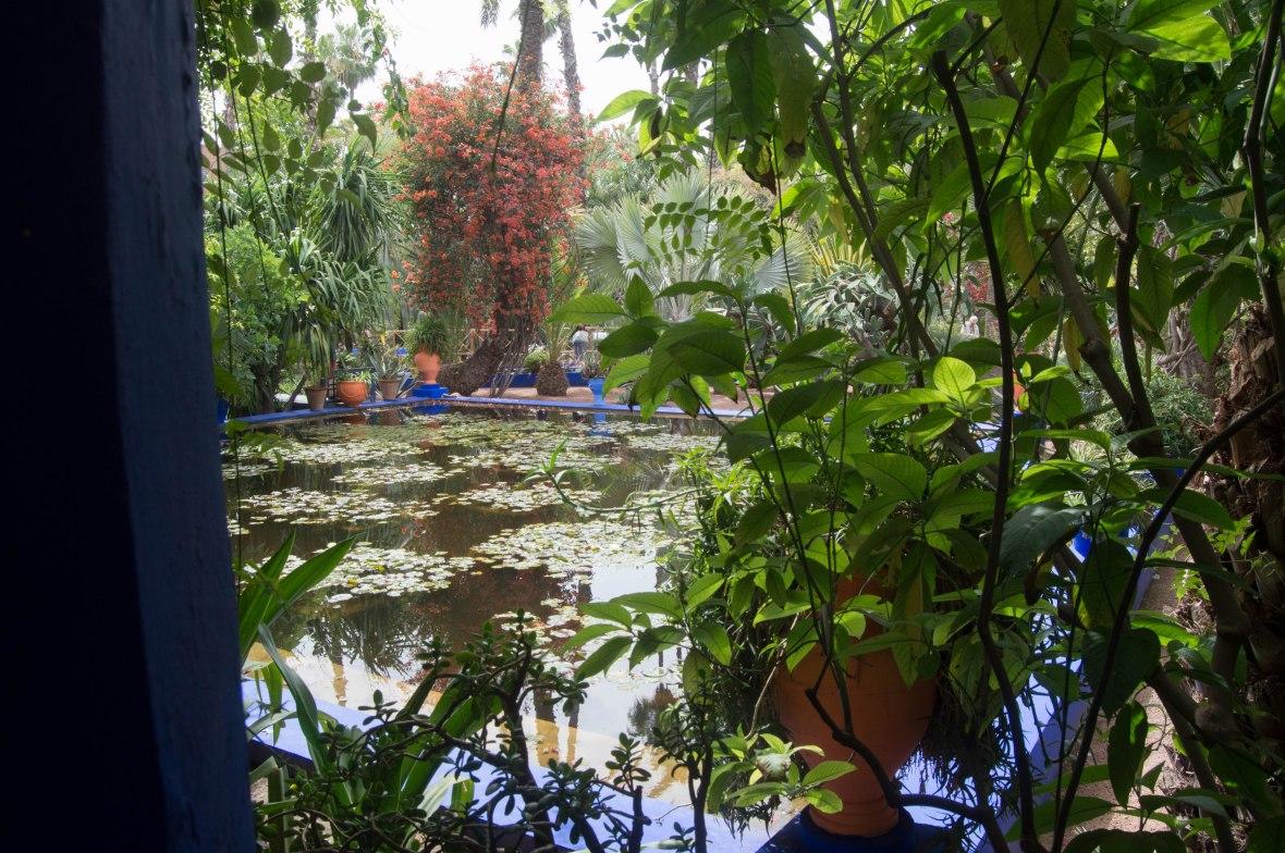 Lily Pads, Majorelle Garden, Marrakech, Morocco