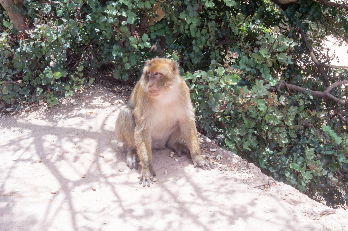 Monkey With Peanuts, Ouzoud Falls, Morocco