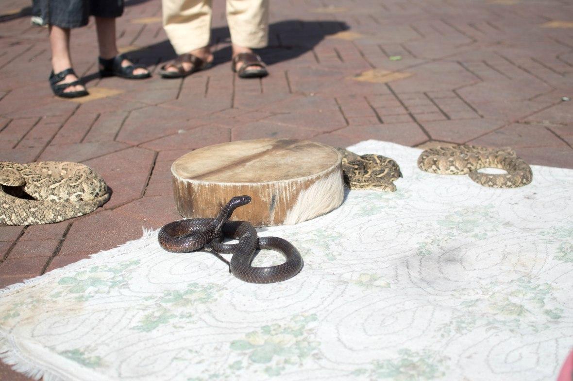 Snakes, Jemaa El Fnaa, Marrakech, Morocco