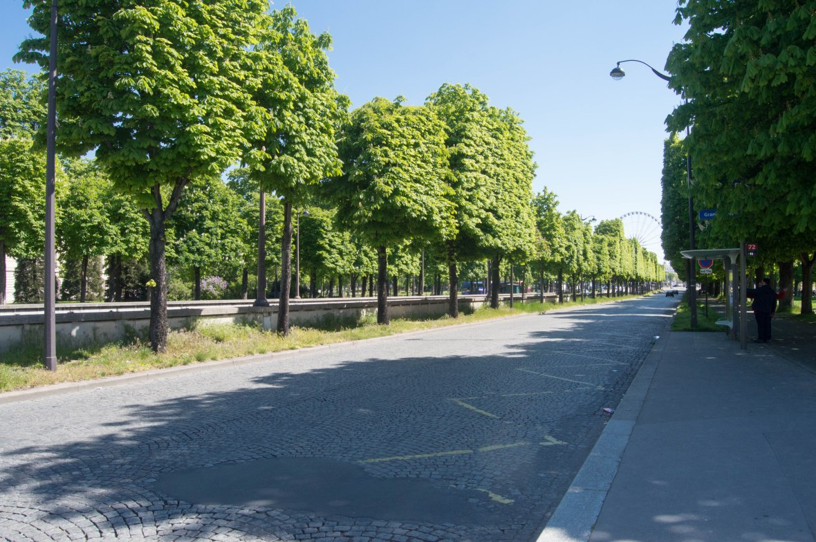 tree lined champs elysees, paris, france