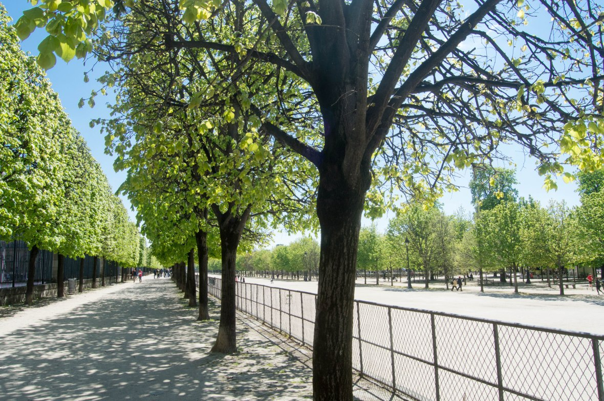 Trees, Jardin des Tuileries, Paris, France