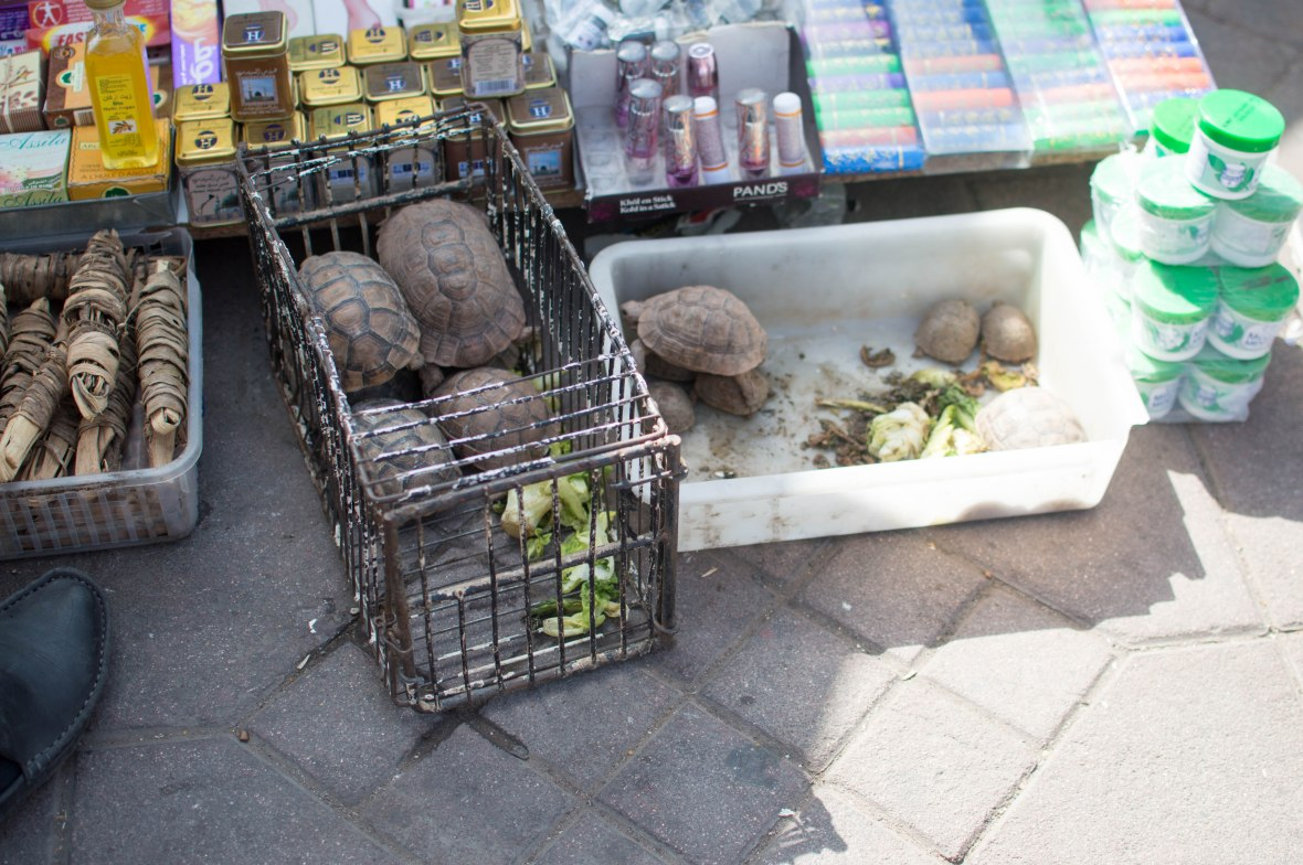 Turtles For Sale, Souks, Marrakech, Morocco