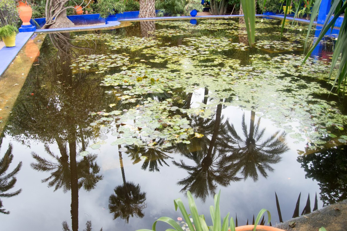 Water Lily Pool, Majorelle Garden, Marrakech, Morocco