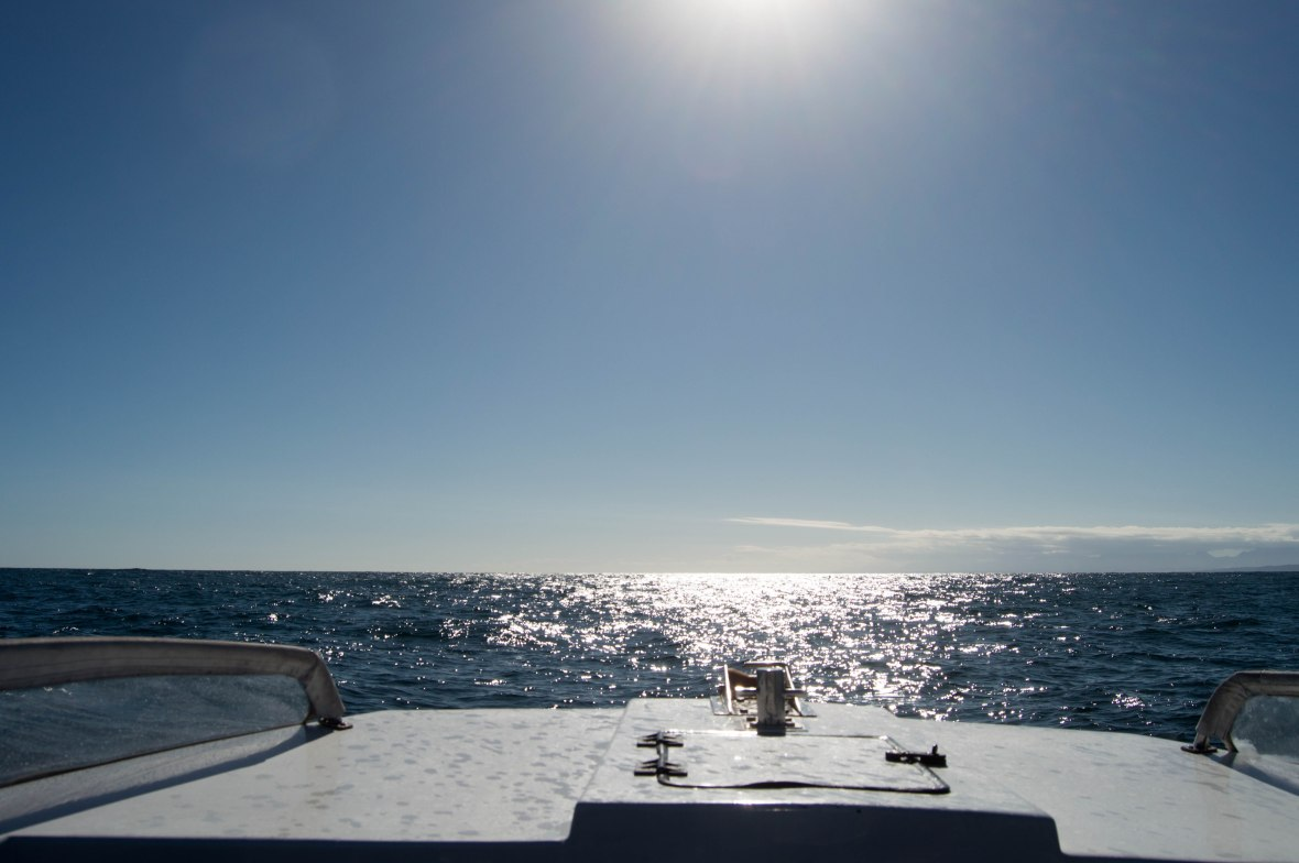 boat-ride-ocean-odyssey-whale-watching-knysna-south-africa