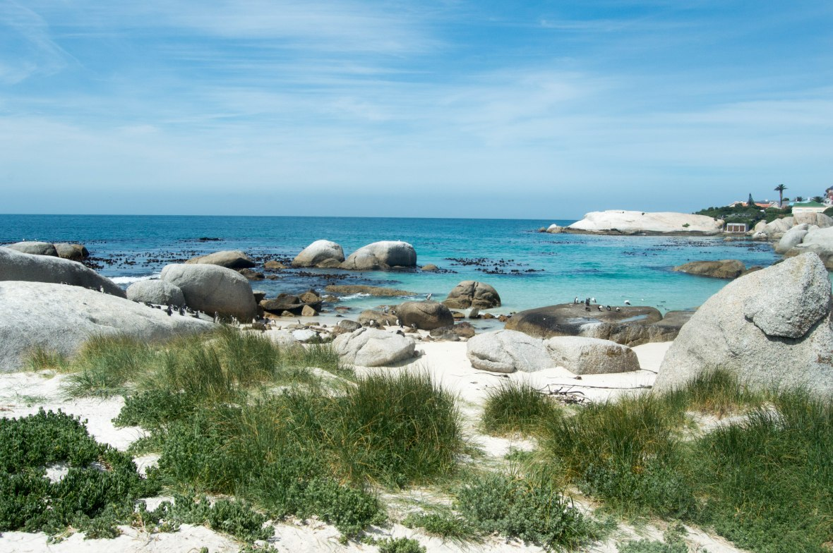 boulders-beach-cape-town-south-africa