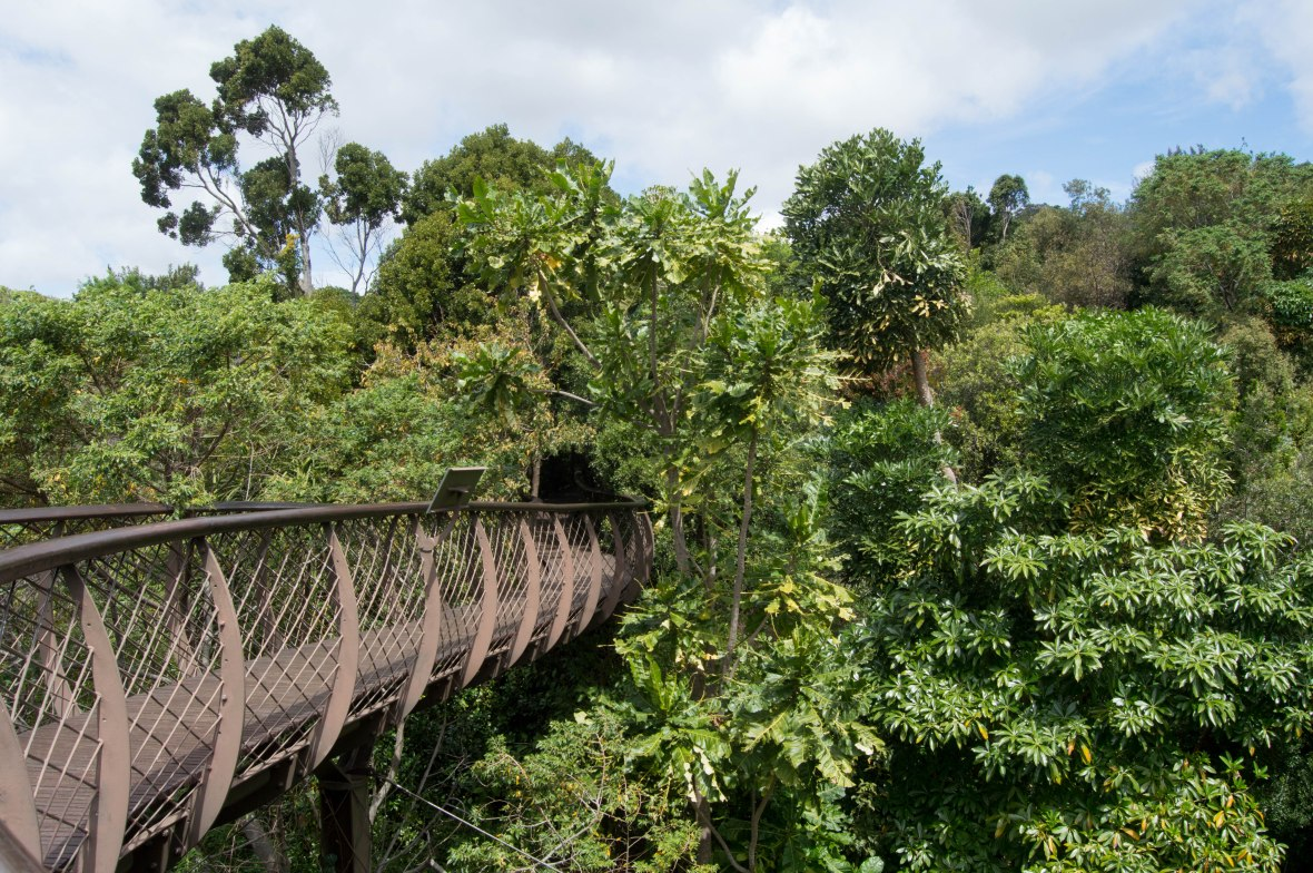 centenary-tree-canopy-walkway-national-kirstenbosch-garden-cape-town-south-africa