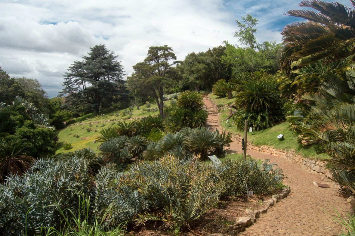 exploring-kirstenbosch-national-botanical-garden-cape-town-south-africa