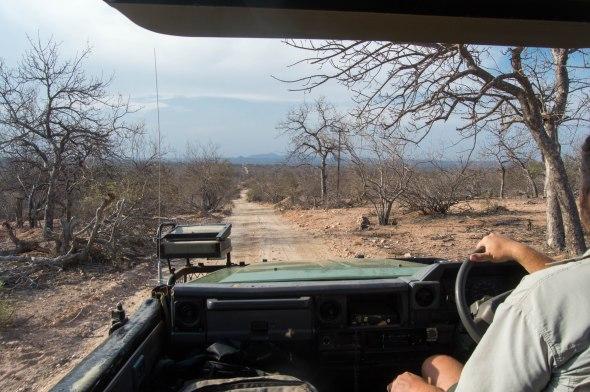 landscape-on-safari-lowveld-south-africa