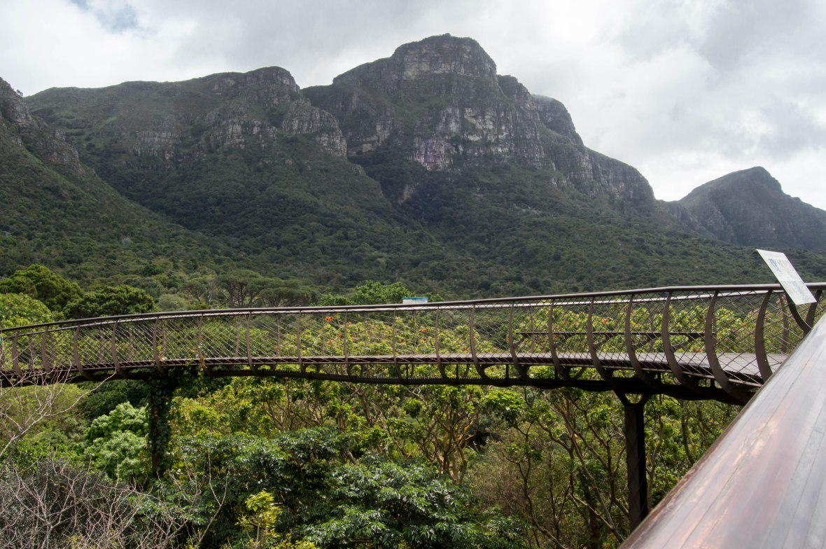 mountain-views-centenary-tree-canopy-walkway-national-kirstenbosch-garden-cape-town-south-africa