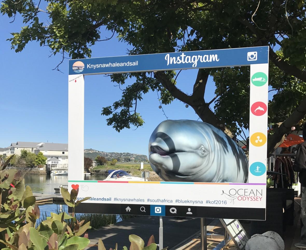 Ocean Odyssey, Whale Watching, Knysna, South Africa.JPG