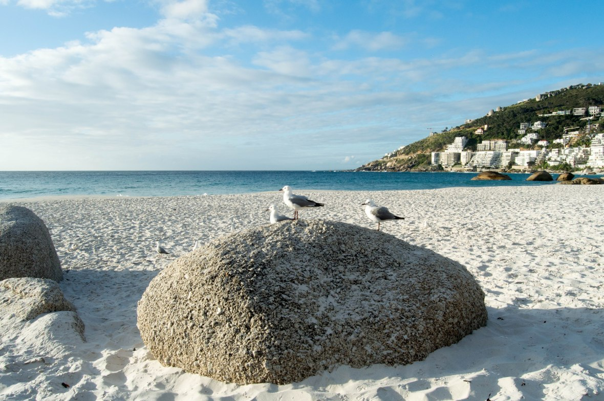 seagulls-clifton-beach-4-cape-town-south-africa