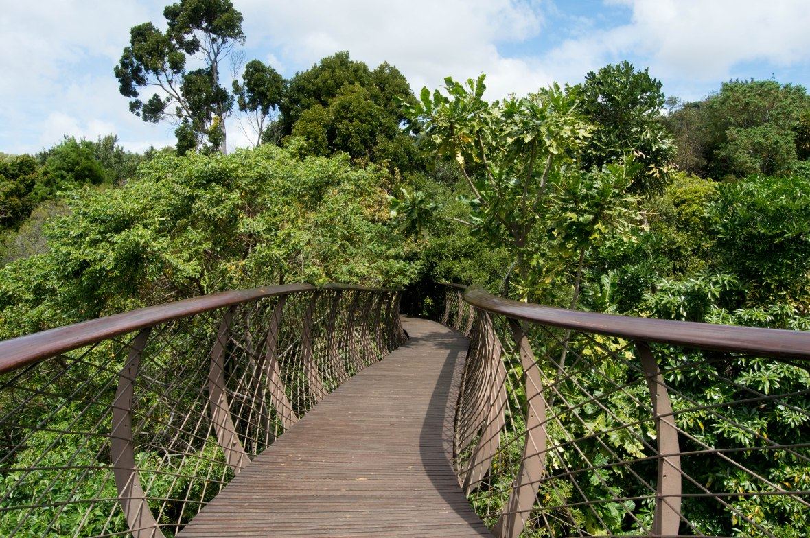 the-centenary-tree-canopy-walkway-national-kirstenbosch-garden-cape-town-south-africa