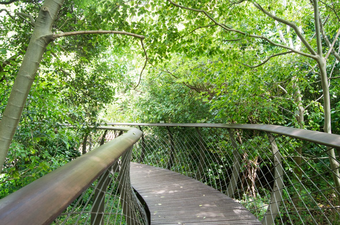 treetop-walkway-national-kirstenbosch-garden-cape-town-south-africa