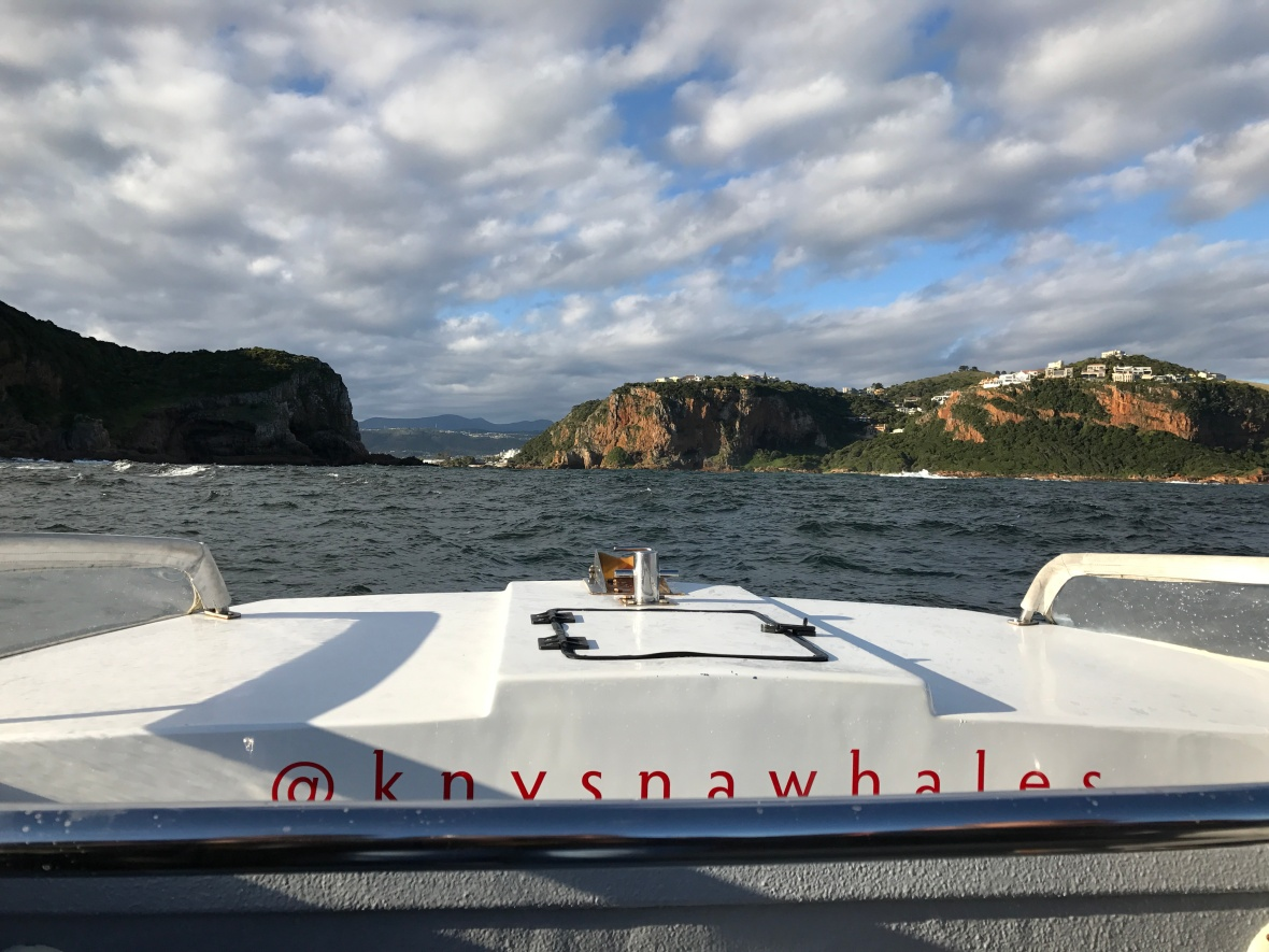 whale-watching-knysna-south-africa