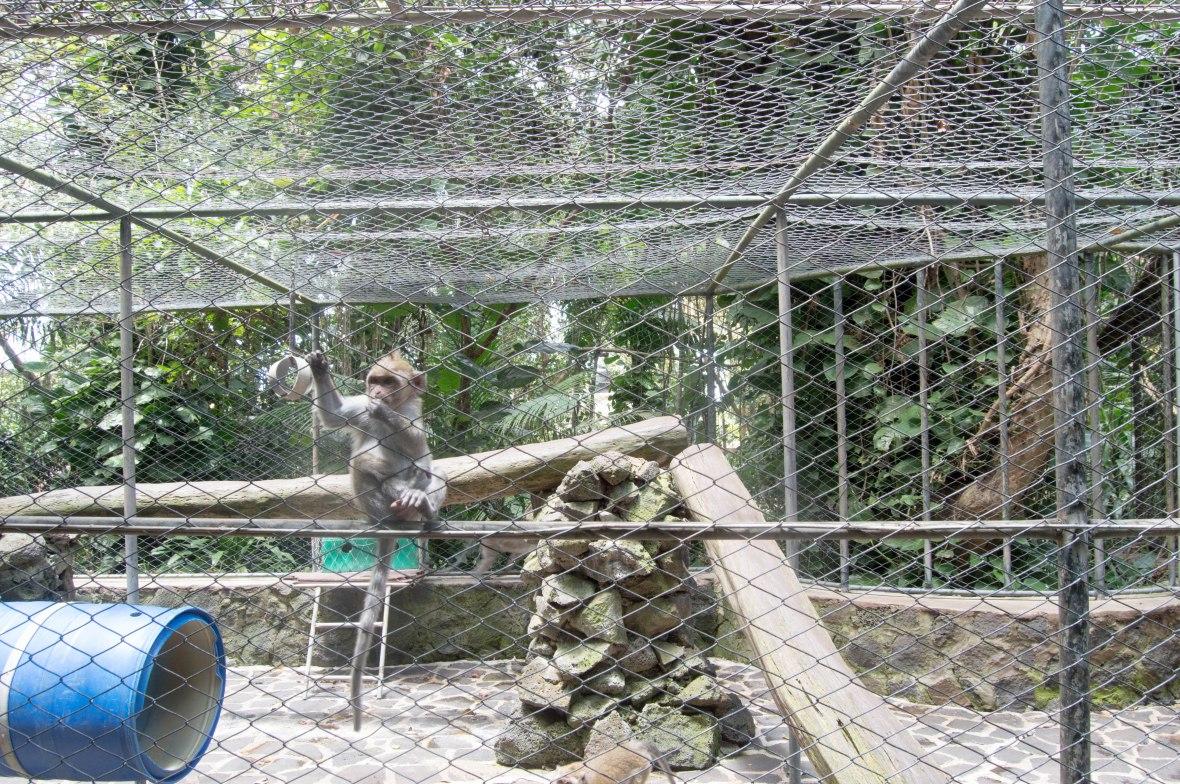 baby-monkey-la-vanille-nature-park-mauritius