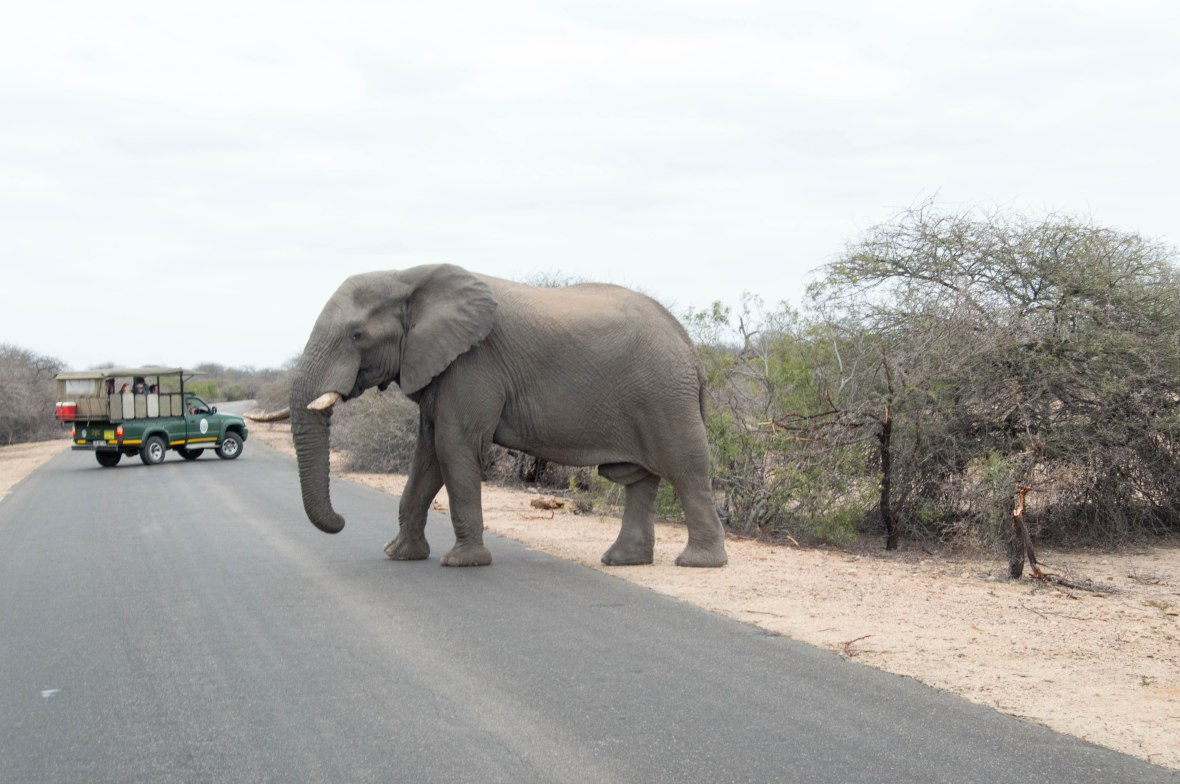 elephant-crossing-kruger-national-park-south-africa-2