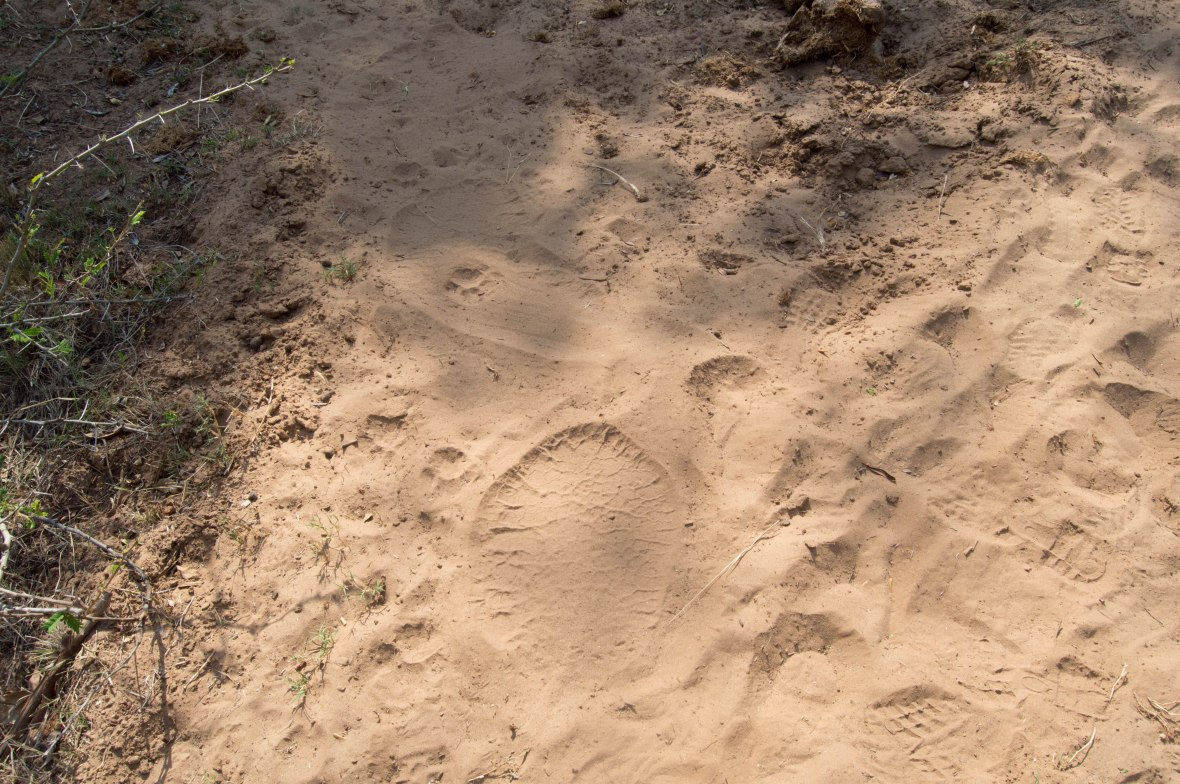 elephant-footprints-safari-south-africa
