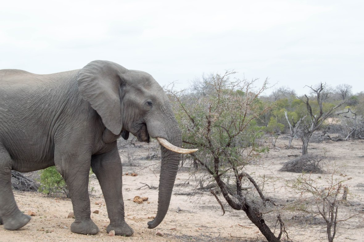 elephant-safari-south-africa